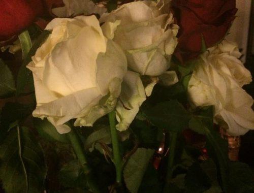 rozen - freelennse