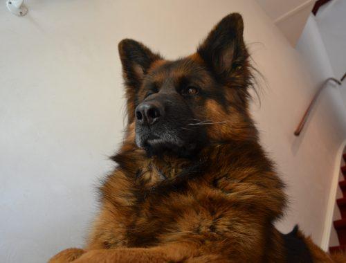 Een hond adopteren, en dan?