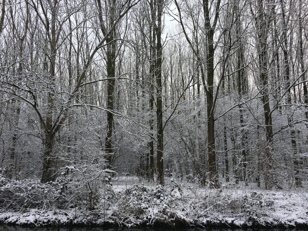 Vreeswijk sneeuw bomen