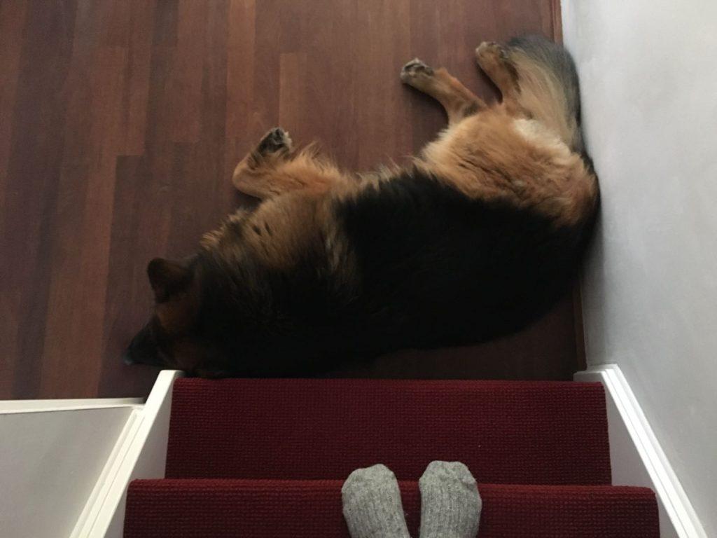 Vince onderaan de trap