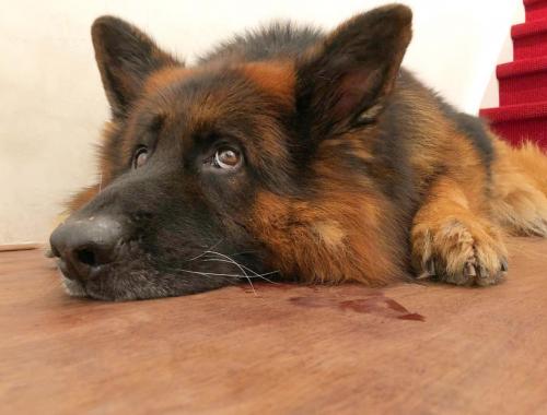Invloed hond mentale gezondheid