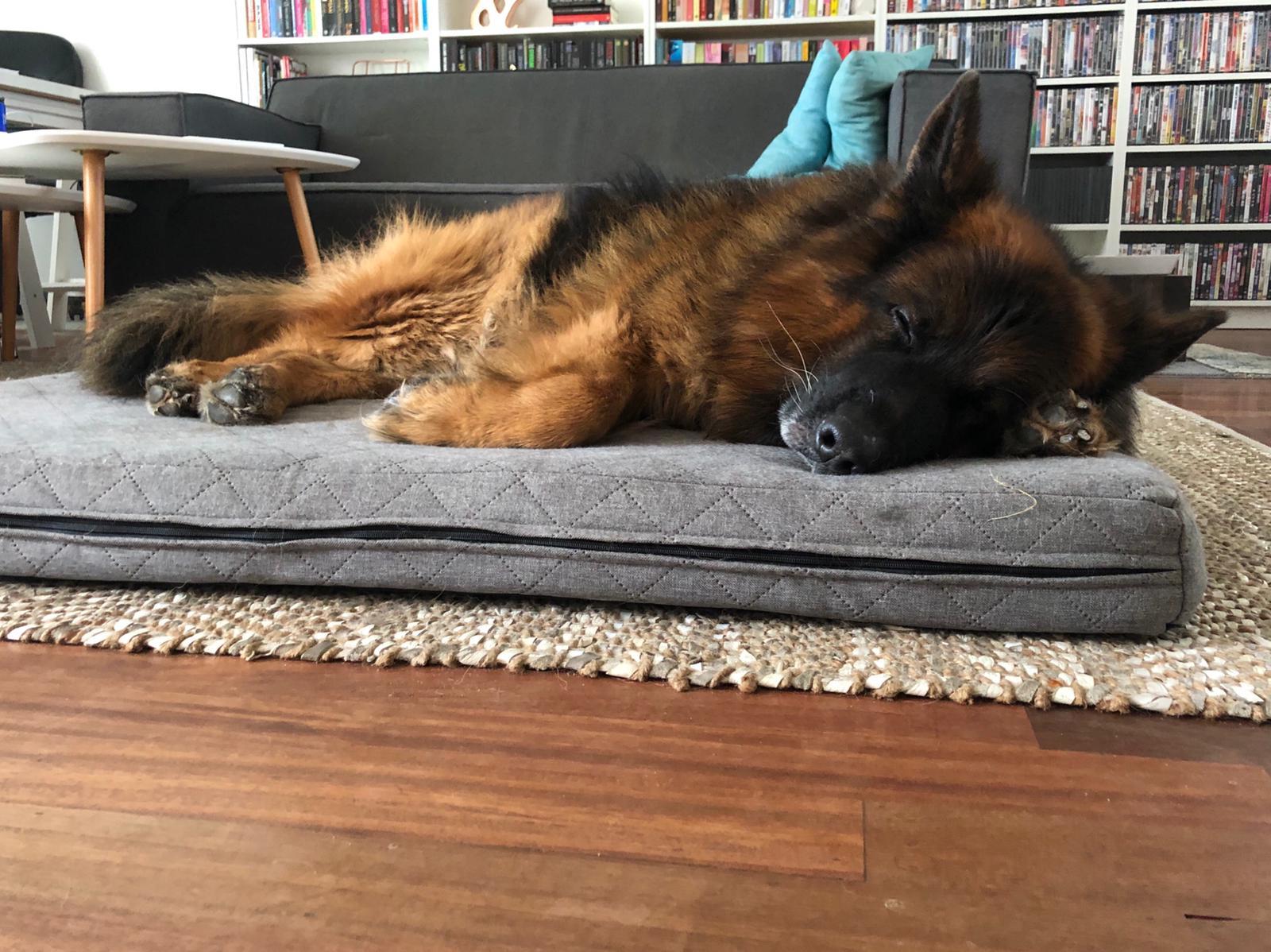 Slapende herdershond