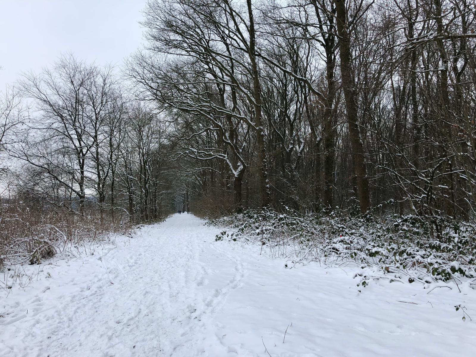Bos sneeuw