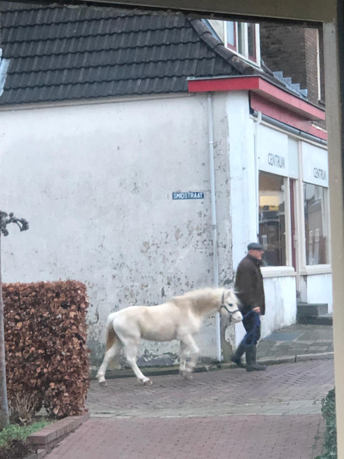 Man laat pony uit
