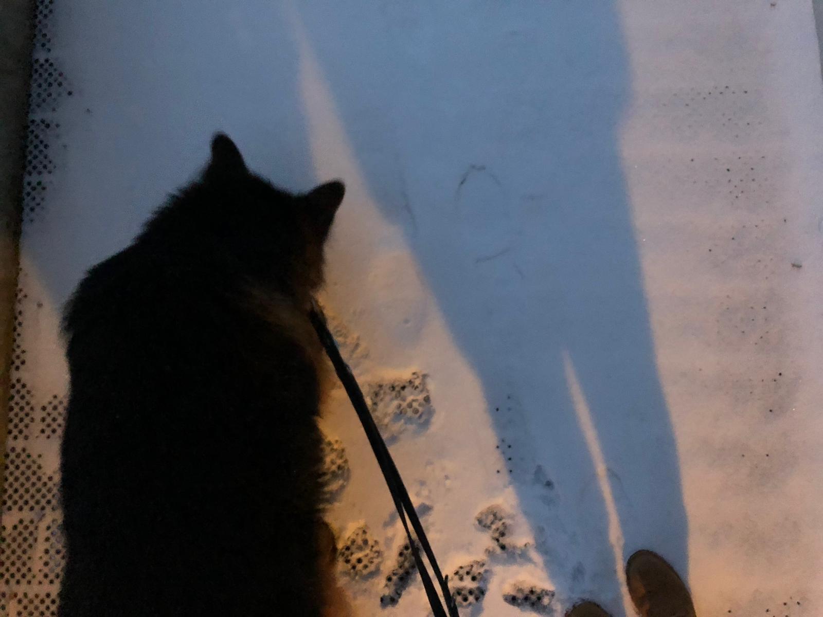 Vincie in de sneeuw