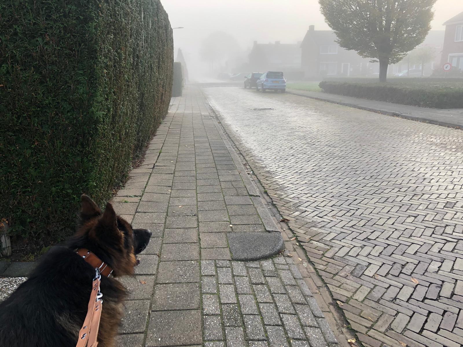 Zie geen hond voor ogen