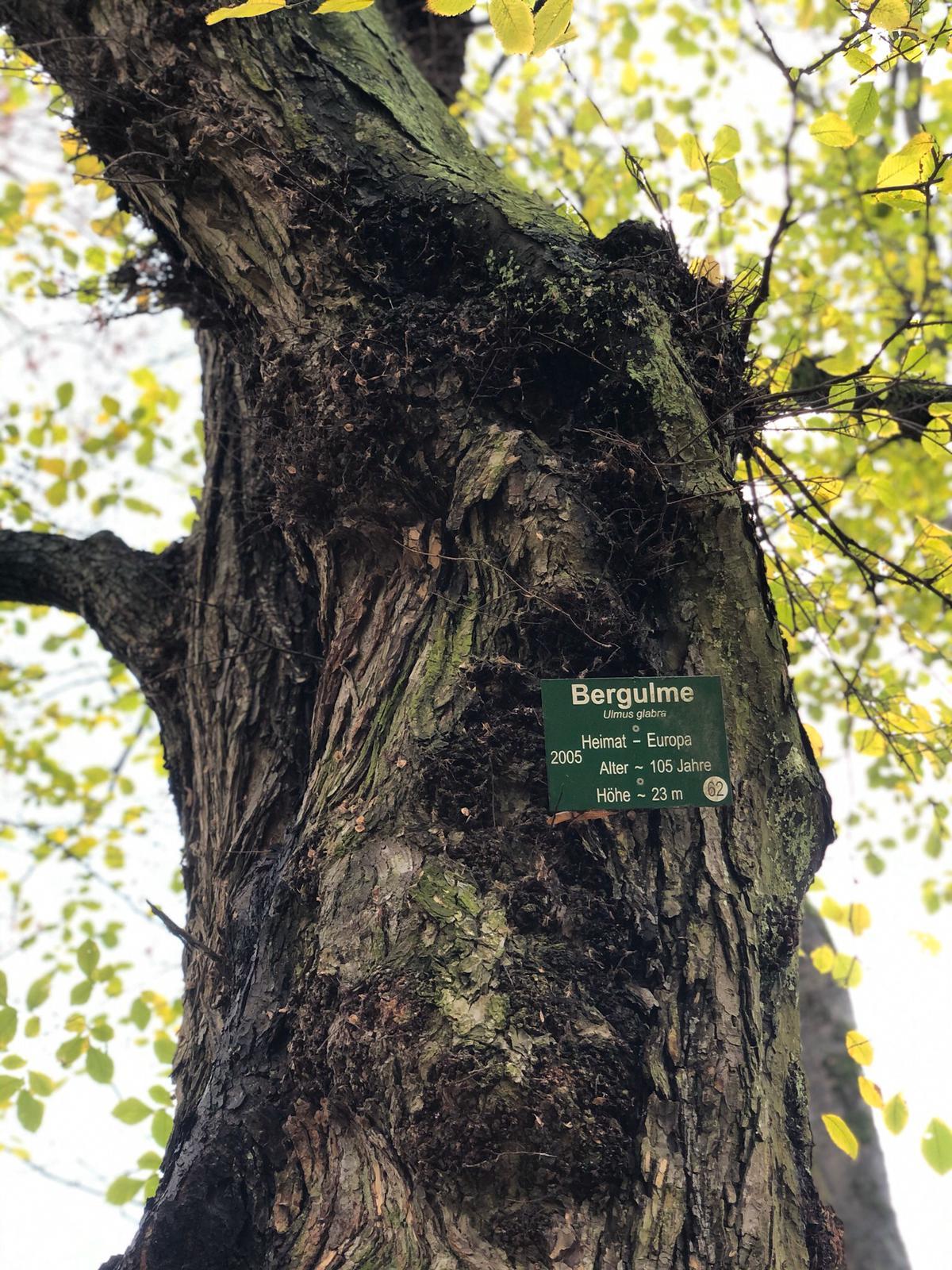 Bomen spotten