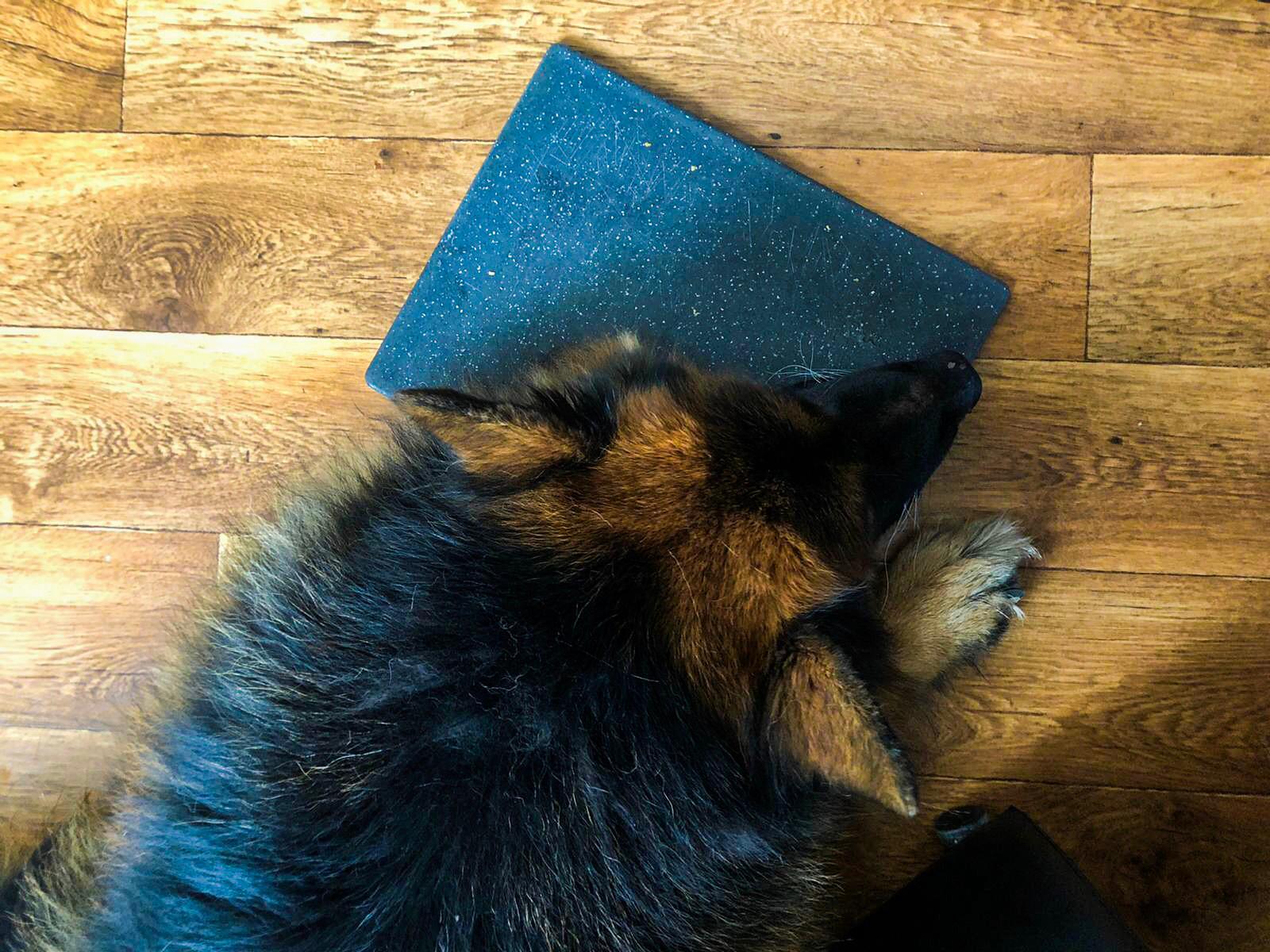 Hond in slaap gevallen op broodplank