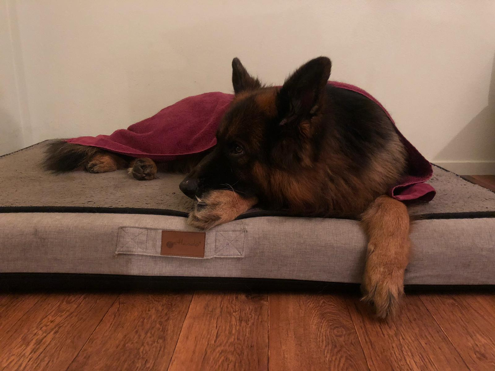 Natte hond is zielig