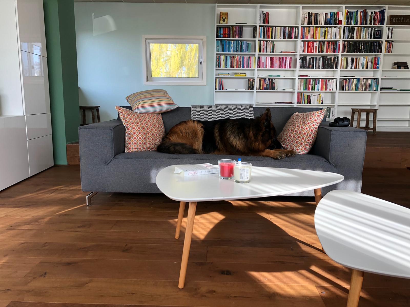 Hond ligt op de bank